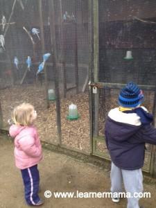 Newbridge house and farm blue birds