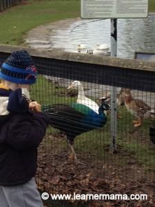 feeding the ducks newbridge house and farm